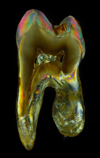 Rohrer Dental-Labor